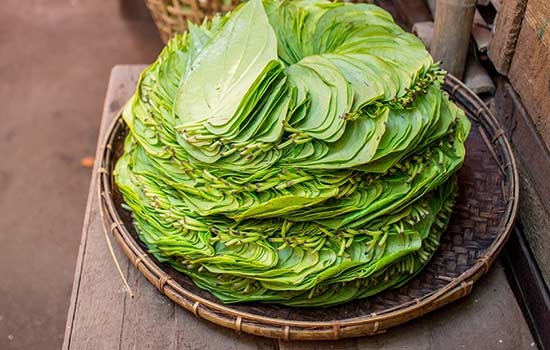 Amazing Benefits Of Betel Leaves Nobody Told You