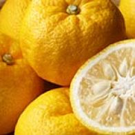 Citron Is Good For Gut Health, Immunity And More