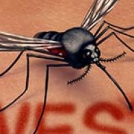 West Nile Virus: Read All About Symptoms & Treatment