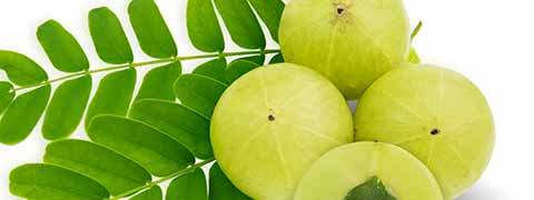 Indian Gooseberry: Incredibly Tasty Amla Recipes To Boost Immunity