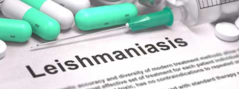 Leishmaniasis: Causes, Symptoms And Treatment
