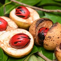 Nutmeg/Jaiphal: 5 Splendid Wellness Incentives Of This Aromatic Spice