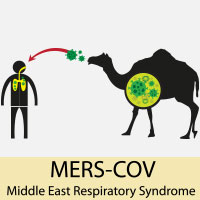 Middle East Respiratory Syndrome (MERS): Causes, Symptoms And Treatment