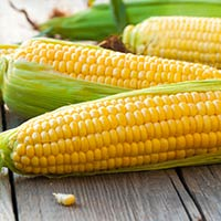 Corn/Maize/Cholam: Health Benefits, Nutrition, Uses For Skin And Hair, Recipes, Side Effects