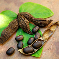 Kaunch Beej: Health Benefits, Nutrition, Uses In Ayurveda, Recipes, Side Effects