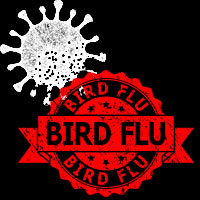 Bird Flu Outbreak: Know About The Infectious Avian Influenza And Whether It Can Infect Humans?