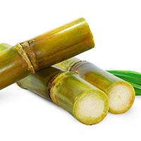 Sweeter Side Of Sugarcane That No One Told You About