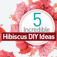 Hibiscus: 5 Amazing DIY Recipes For A Healthy Skin And Lustrous Hair-Infographic