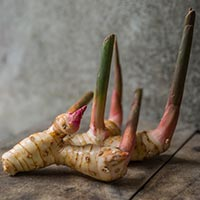 Galangal: Health Benefits, Nutrition, Uses In Ayurveda, Recipes, Side Effects