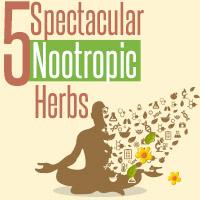 Nootropics: 5 Excellent Ayurvedic Herbs To Enhance Memory – Infographic