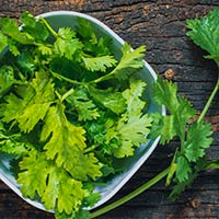 Coriander Leaves: 5 Excellent Health Benefits Of Adding These Aromatic Leaves To Your Daily Diet