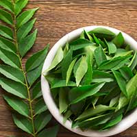 Curry Leaves: Medicinal Uses, Therapeutic Benefits For Hair, Diabetes And Supplements