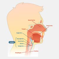 Epiglottitis: Causes, Symptoms, And Treatment
