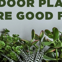 5 Indoor Plants that are good for you