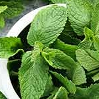 Mint Leaves Have Soothing Benefits For Irritated Skin
