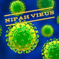 Nipah Virus: Kerala On Alert After Youth Hospitalised With Deadly Fever