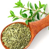 Thyme Essential Oil: 5 Amazing Benefits Of This Medicinal Herb Based Products