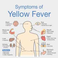 Yellow Fever: Causes, Symptoms, And Treatment