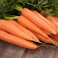 Carrots Can Contribute To Health & Beauty