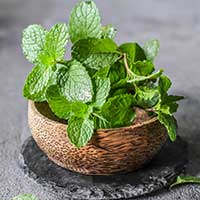 Pudina/Mint Leaves: Health Benefits Of Pudina Juice, Uses For Skin, Hair And Side Effects